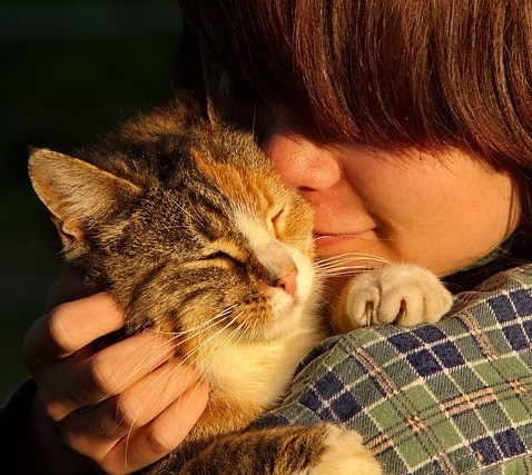 Person comforting and sooting cat