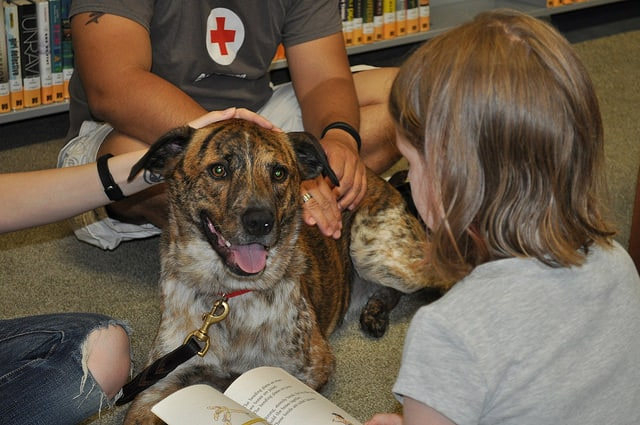 Check with local rescue groups to find a volunteer program.
