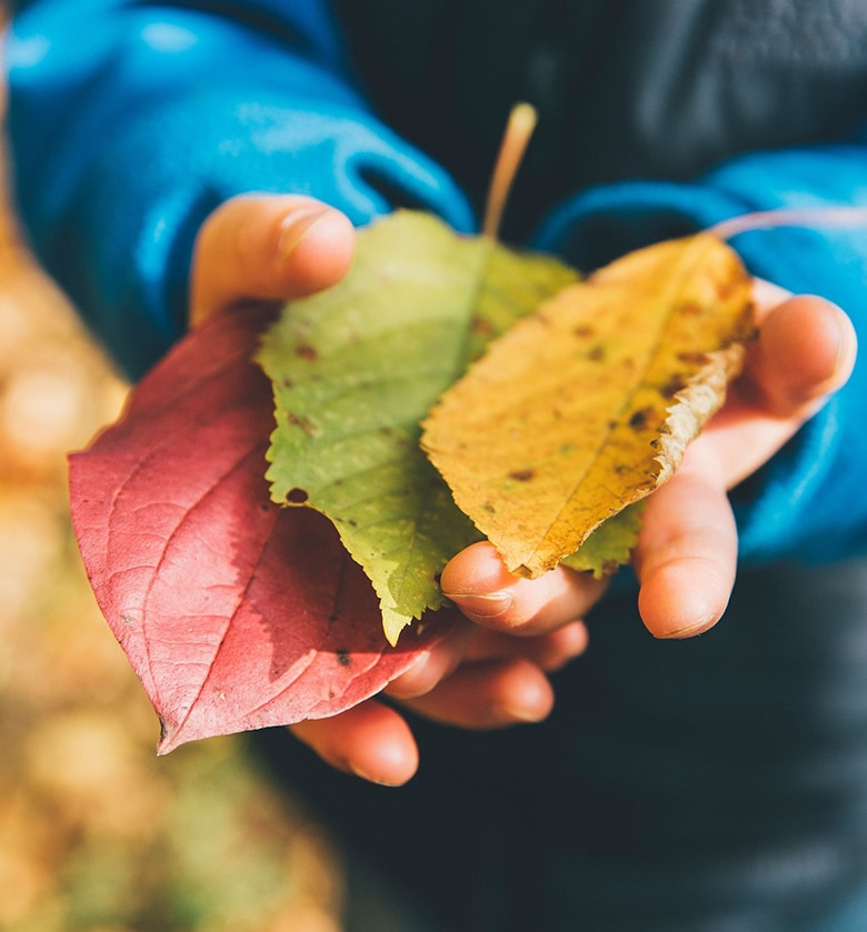 child's hands full of fallen leaves