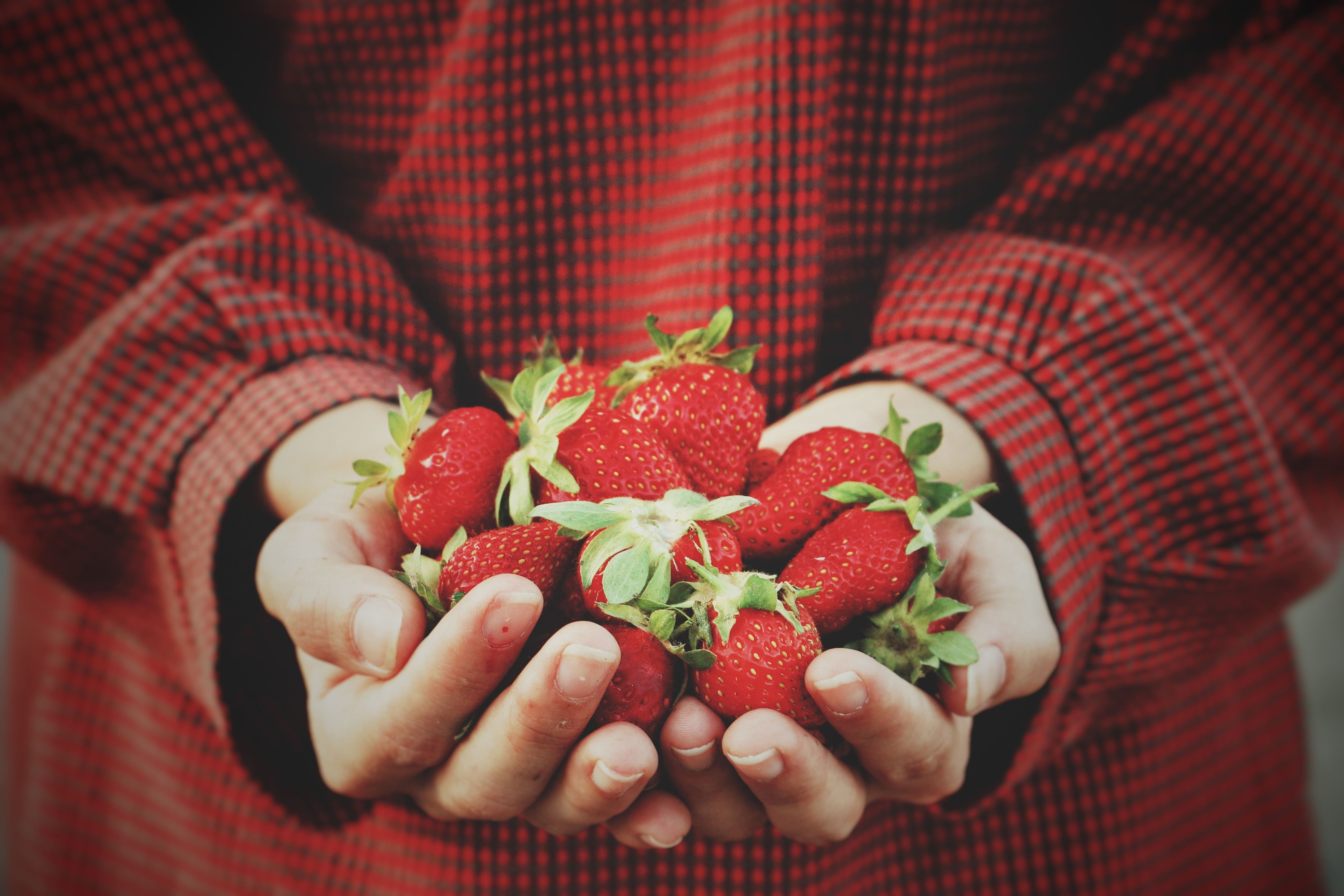 Person holding strawberries from at-home garden