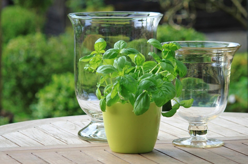 Herbs from the garden pack antioxidants into infused water