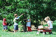 children gleaning in an orchard