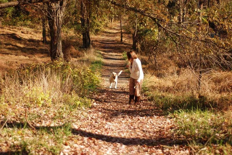 woman walking dog in woods