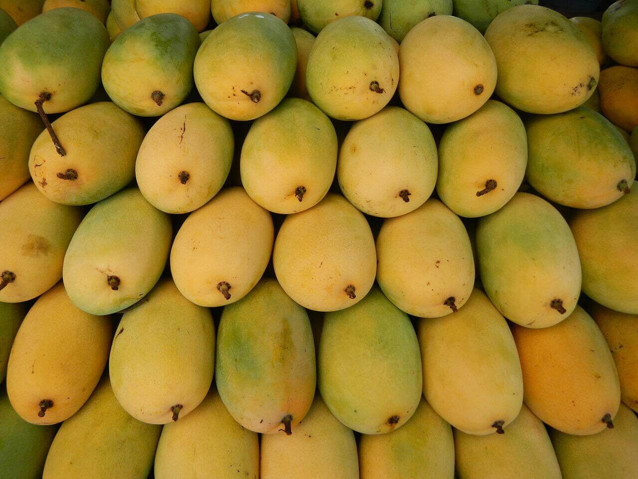 Fresh mangoes ready to eat