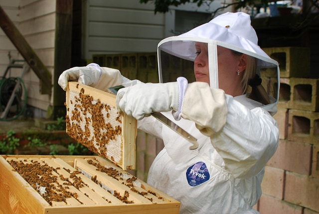 Backyard beekeeping experts say you should check your bees for disease regularly. Here's how to get started in beekeeping.