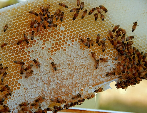 If you've ever considered starting a bee farm, now may be the perfect time to get started. Here's what you need to know - plus a list of supplies - to get started.