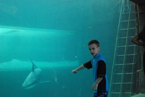 teach water conservation for kids with a trip to the aquarium
